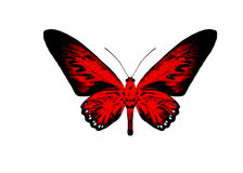 Red butterfly isolated on white background. Royalty Free Stock Image