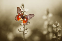 A red butterfly on the moody field Royalty Free Stock Photo