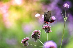 Red Butterfly. Nature, flower, element royalty free stock image