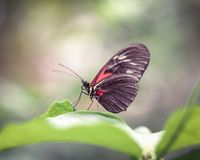Red Butterfly Posing on Leaf with Blurry Background. Hazy dreamy background with colorful red winged butterfly standing on leaf Stock Photo