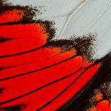 Red butterfly wing Stock Image