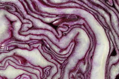Red cabbage. Struicture of first cut of red cabbage structure Stock Images