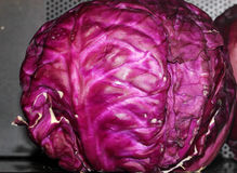 Red cabbage, Brassica oleracea var. capitata, Stock Images
