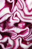 Red cabbage closeup Royalty Free Stock Photography