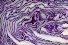 Red cabbage cut in half closeup. Stock Photography