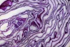 Red cabbage cut in half closeup. Stock Image