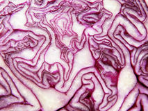 Red cabbage detail Stock Image