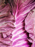 Red cabbage detail Royalty Free Stock Images