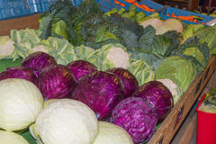 Red cabbage, green cabbage and cauliflower Stock Photos