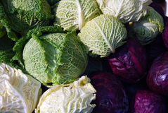 Red cabbage and kale Stock Photo