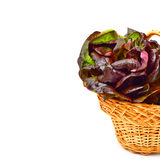 Red cabbage lettuce in basket. royalty free stock photography