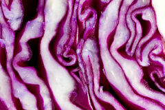 Red Cabbage macro Royalty Free Stock Image