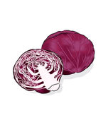 Red cabbage. A vegetable is often used raw for salads and coleslaw Stock Photography