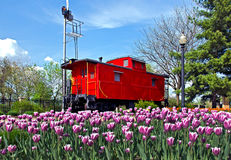 Red caboose with tulips Royalty Free Stock Image