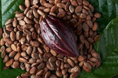 Red cacao pod lay on lay seeds. And green leafs stock photography