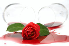 Red camellia in spilled wine Stock Photos