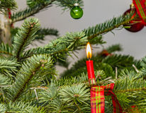 Red candle with flame at the natural christmas tree Royalty Free Stock Photography