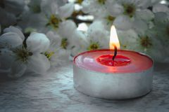 Red candle with white cherry branches royalty free stock photography