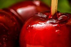 Red candy or toffee apple with green liana vine in the background. royalty free stock images