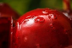 Red candy or toffee apple with green liana vine in the background. stock images