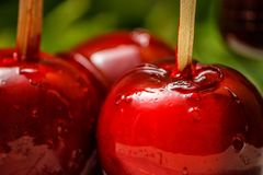 Red candy or toffee apple with green liana vine in the background. royalty free stock photo