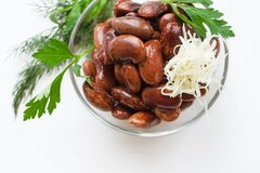 Red canned beans with horse-radish. Red canned beans in glass bowl with horse-radish, fresh green dill and parsley over white background Stock Image