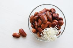 Red canned beans with horse-radish. Red canned beans in glass bowl with horse-radish over white background Stock Photography