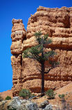 Red Canyon in Utah. USA : orange rocks on blue sky background Stock Photography