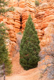 Red Canyon in Utah Royalty Free Stock Image