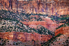 Red Canyons Trees and Cliffs Stock Image