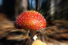 Red cap mushroom Royalty Free Stock Images