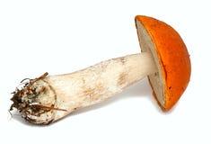 Red cap mushroom Stock Photo