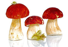 Red capped mushrooms. Three red capped mushrooms against white background; illustration Stock Image