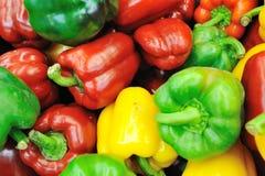 Red capsicum Stock Images