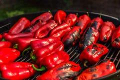Red capsicum Stock Image