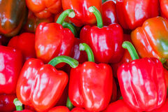 Red capsicum Stock Photography
