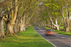 Red Car in the Avenue of Trees Stock Photo