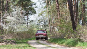 Red car rides through a dirt road in the forest. stock video footage