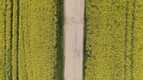 The red car rides from top to bottom on the road in canola oilseed field. Aerial top view of agriculture land with old and broken. Rural road stock footage