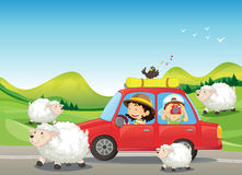 The red car and the sheeps at the road. Illustration of the red car and the sheeps at the road Royalty Free Stock Images