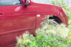 Red car in the summer to green grass Royalty Free Stock Images