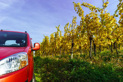 Red car in yellow vineyard, Alsace Royalty Free Stock Image