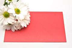 Red card with a daisy Stock Images