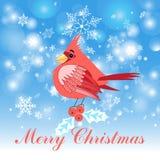 Red cardinal bird Stock Images