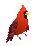 Red cardinal bird isolated. Cute red cardinal bird illustration Royalty Free Stock Image