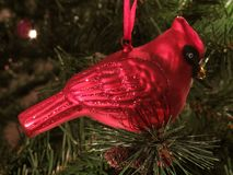 Red Cardinal Christmas Decoration Stock Photography
