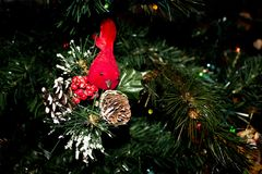 Red Cardinal Ornament and Snowy Pine cones on a Christmas Tree. Red Cardinal Christmas Ornament and Snowy Pine cones hanging on the Christmas Tree royalty free stock image