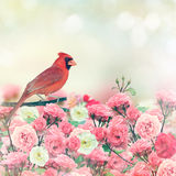 Red Cardinal In Rose Garden Royalty Free Stock Photo