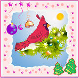 Red Cardinal. Royalty Free Stock Photography