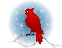 Red Cardinal Sitting On Branch In Winter Royalty Free Stock Photos